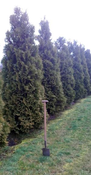 Gartenbaumeisterbetrieb Bolder in Datteln